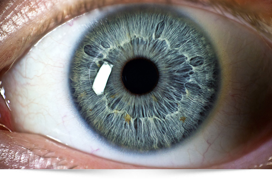 vision-vista